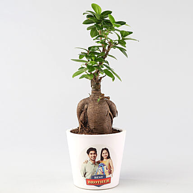 Personalised Ficus Ginseng For Rakhi: