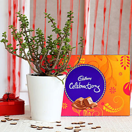 Potted Jade Plant & Cadbury Celebrations Combo: