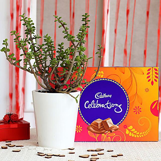 Potted Jade Plant & Cadbury Celebrations Combo: