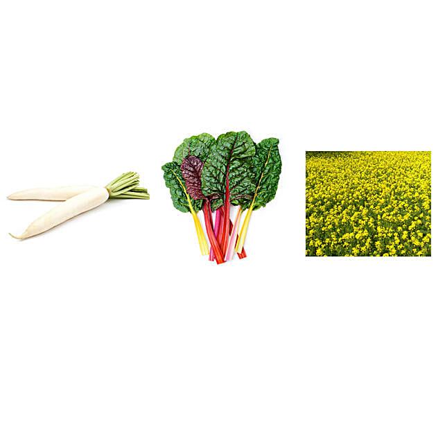 Radish Swiss Chard & Mustard Seeds Combo: Exotic Plant-seeds