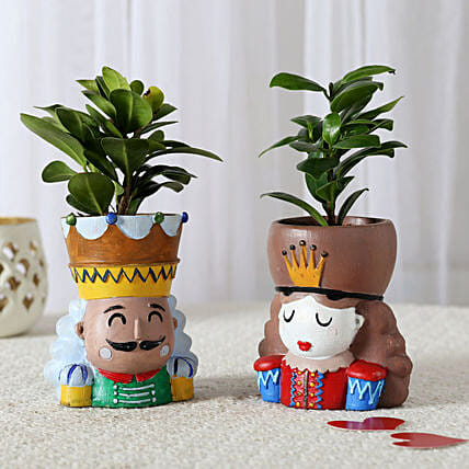 Set of 2 Ficus Compacta In King Queen Pots: Romantic Plants