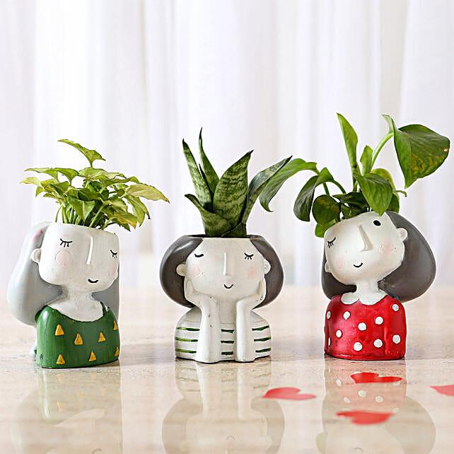 Set of 3 Air Purifying Plants In Raisin Pots: Indoor Plants