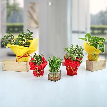 Set of 5 Fantastic Indoor Plants: Air Purifying Plants