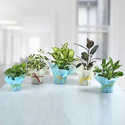 Set of 5 Refreshing Green Plants: