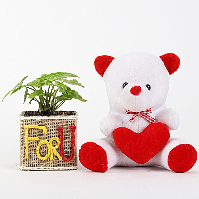 Syngonium Plant & Teddy Bear Combo: