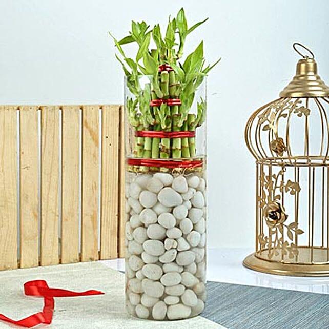 Three Layer Bamboo Decor Terrarium: