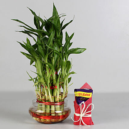 Three Layer Lucky Bamboo with Cadbury Dairy Milk: