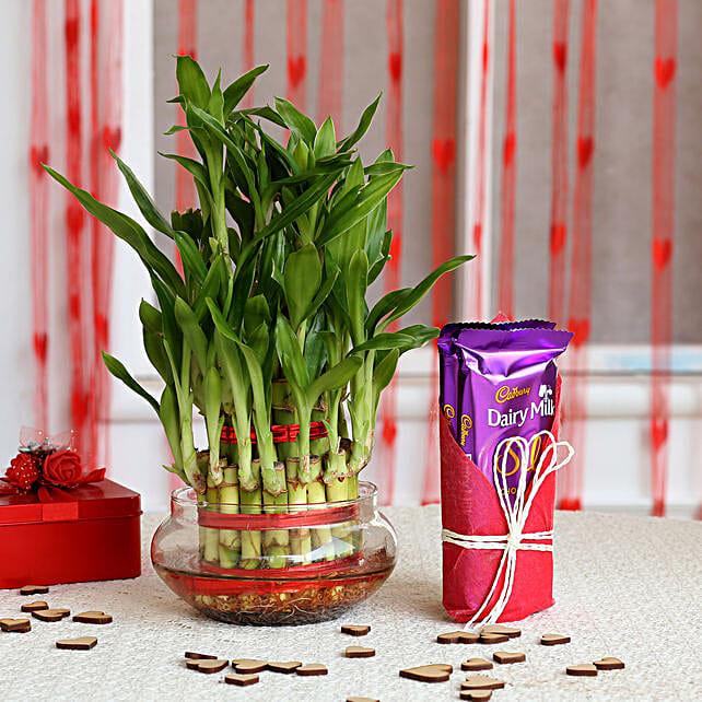 Three Layer Lucky Bamboo with Dairy Milk Silk: Cadbury Chocolates
