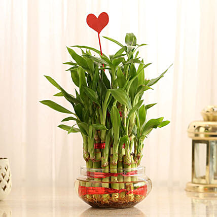Three Layer Lucky Bamboo With Heart Shaped Tag: Indoor Plants