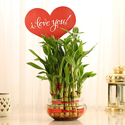Three Layer Lucky Bamboo With I Love You Tag: Indoor Plants