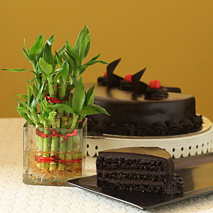Truffle Cake N Two Layer Bamboo Plant: Send Good Luck Plants