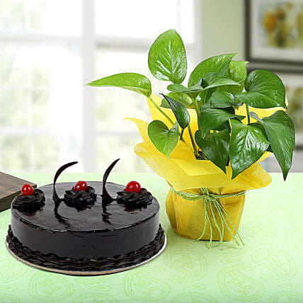 Truffle Cake With Money Plant: Cakes N plants