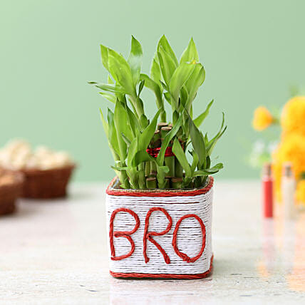 Two Layer Bamboo Plant For Bro: Lucky Bamboo Plants