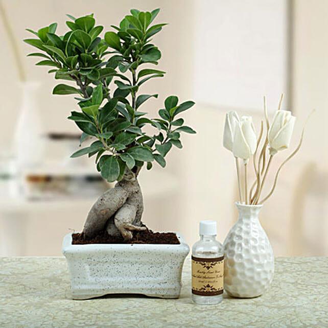 Bonsai N Oil Diffuser: Premium Plants