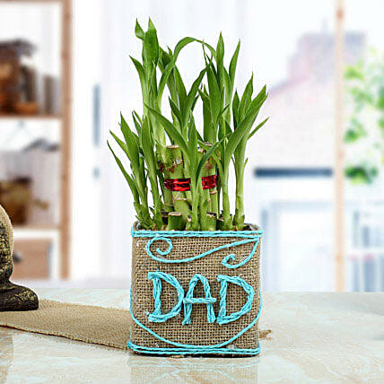 Good Luck Bamboo Plant for Dad: Exotic Plants