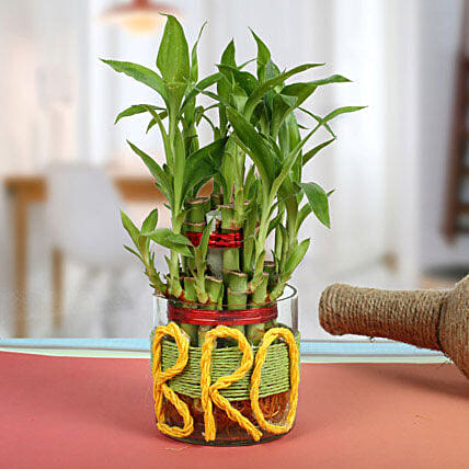 Lucky Bamboo For Brother: Feng Shui Gifts