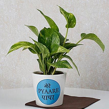 Money Plant For Dad: Best Outdoor Plant