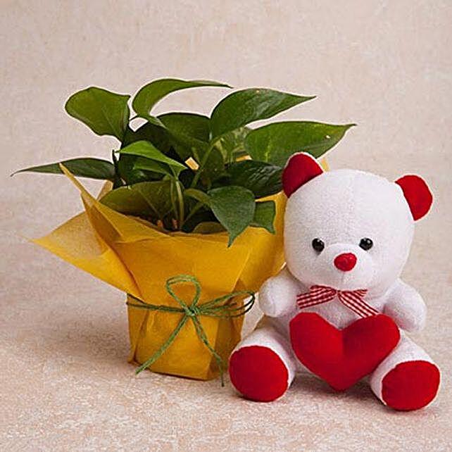 Money Plant N Teddy Combo: Desktop Plants