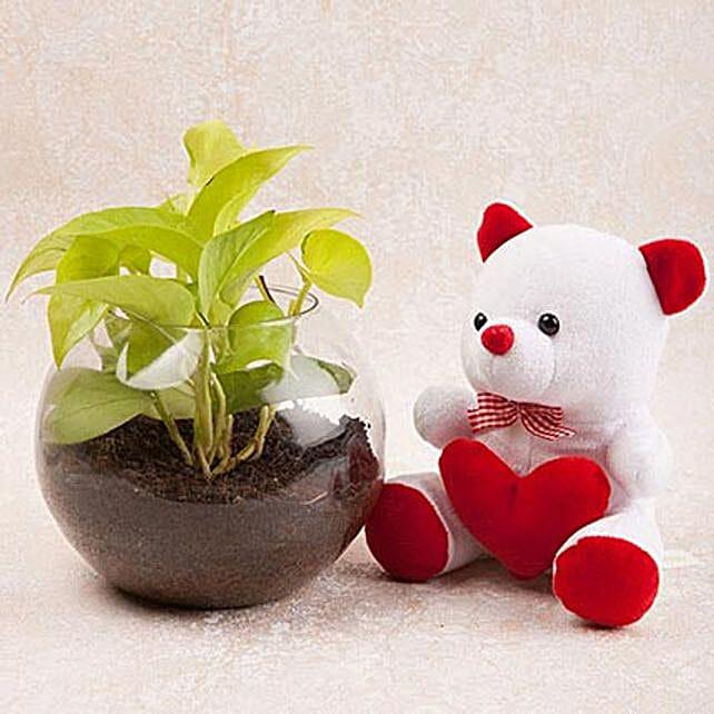Money Plant Terrarium N Cute Teddy Combo: Soft toys Delivery for Bhai Dooj