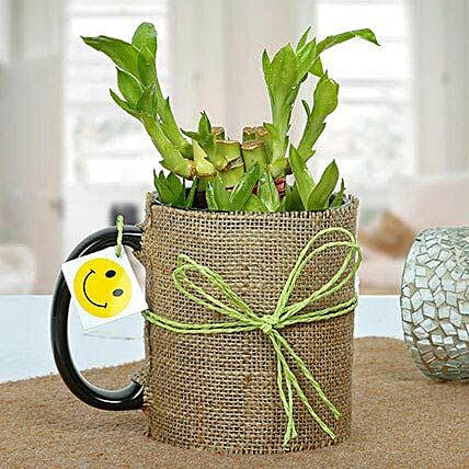 Mug Full of Lucky Bamboo Plant: Rare Plant Gifts