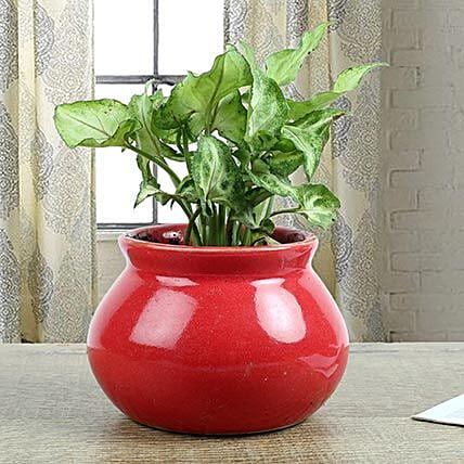 Syngonium Plant With Red Vase: Potted Plants