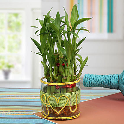 Love For Lucky Bamboo: Wedding Anniversary Gifts for Husband