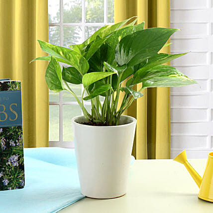 Striking Money Plant: Ornamental Plant Gifts