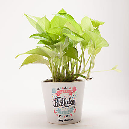 Happy Birthday Golden Money Plant: Personalised Pot plants