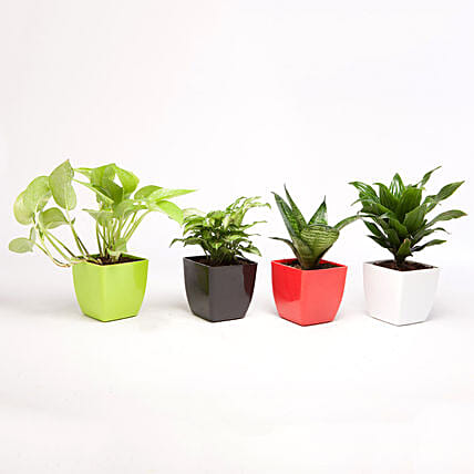 Set of 4 Green Plants in Beautiful Plastic Pots: