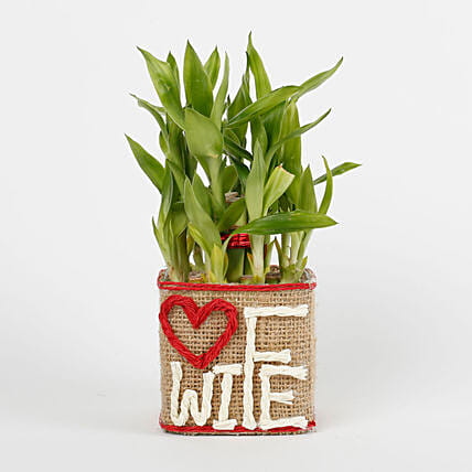 Two Layer Lucky Bamboo For Wife: Send Karwa Chauth Gifts