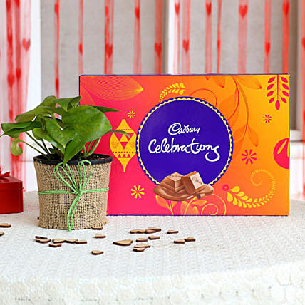 Money Plant in Black Pot with Cadbury Celebrations: Best Outdoor Plant