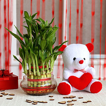 Three Layer Lucky Bamboo with Teddy Bear: Combo Gifts