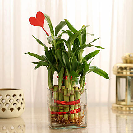 Two Layer Lucky Bamboo With Heart Shaped Tag: Lucky Bamboo for Birthday