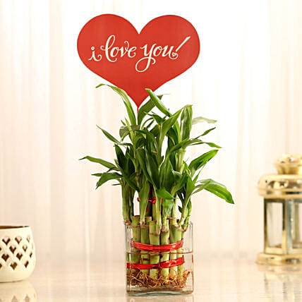 Two Layer Lucky Bamboo With I Love You Tag: Plants for Wife
