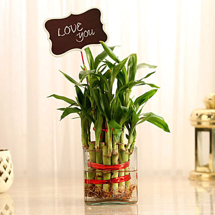Two Layer Lucky Bamboo With Love You Tag: Plants to Bengaluru