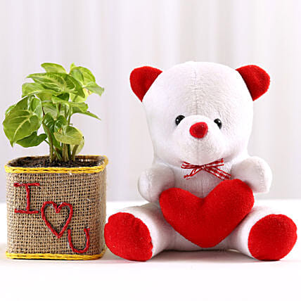 Syngonium Plant in I Love You Vase & Teddy Bear: Soft Toys Gifts