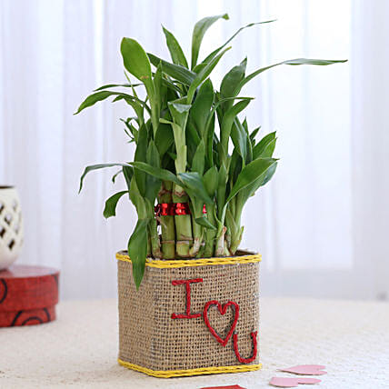 Valentine Special 2 Layer Lucky Bamboo In I Love U Glass Vase: Valentines Day Lucky Bamboo