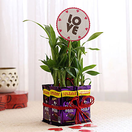Lucky Bamboo with Love Tag & Dairy Milk Combo: Order Plants n Chocolates