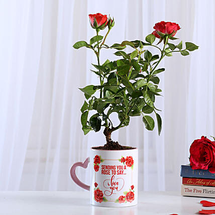 Rose Plant In White Ceramic Mug: Rose Plants