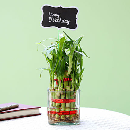 2 Layer Bamboo Plant For Happy Birthday: