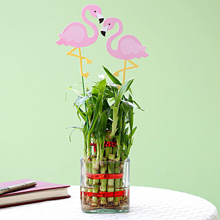 2 Layer Bamboo Plant With Flamingo: Lucky Bamboo Plants