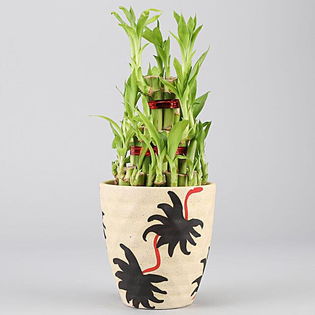 3 Layer Bamboo Plant In Designer Ceramic pot: Desktop Plants