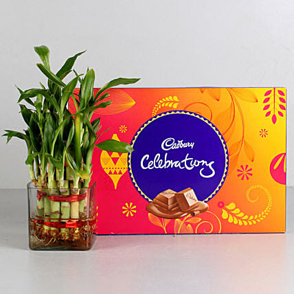 Two Layer Bamboo Plant & Cadbury Celebrations Combo: