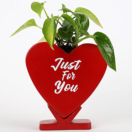 Money Plant In Just For You Ceramic Pot: Outdoor Plants