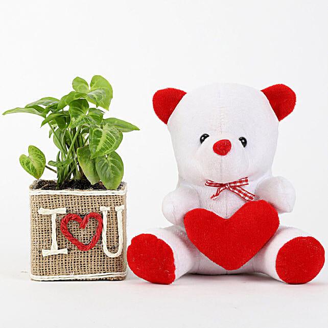 Syngonium Plant In Vase With Teddy Bear: Plants N Teddy Bears