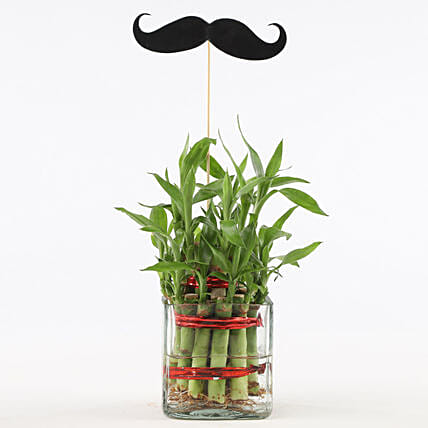 2 Layer Bamboo Plant With Mustache: Lucky Bamboo Plants