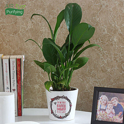 Enchanting Peace Lily Plant: Flowering Plants