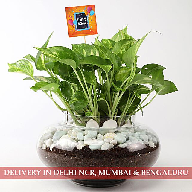 Beautiful Scindapsus Plant For Birthday: Send Plants to Mumbai