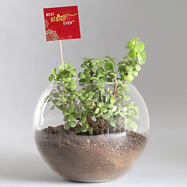 Jade Plant Terrarium with Best Sister Ever Tag: Terrariums Plants