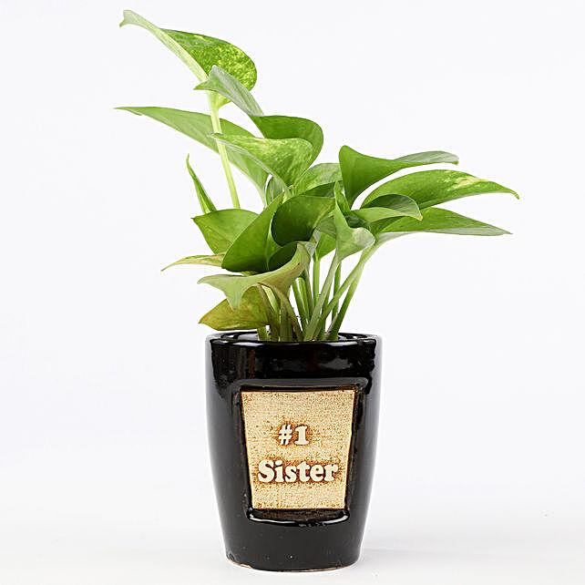 Money Plant In Number One Sister 3D Pot: Plants For Raksha Bandhan